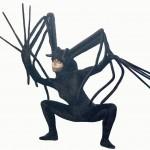 Araignée photographe _ADC_